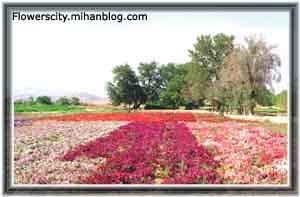 یکی از مزرعه های گل محلات